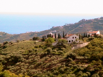 Spain, Med sea, Meditteranean, cyprus trees, olive trees,
